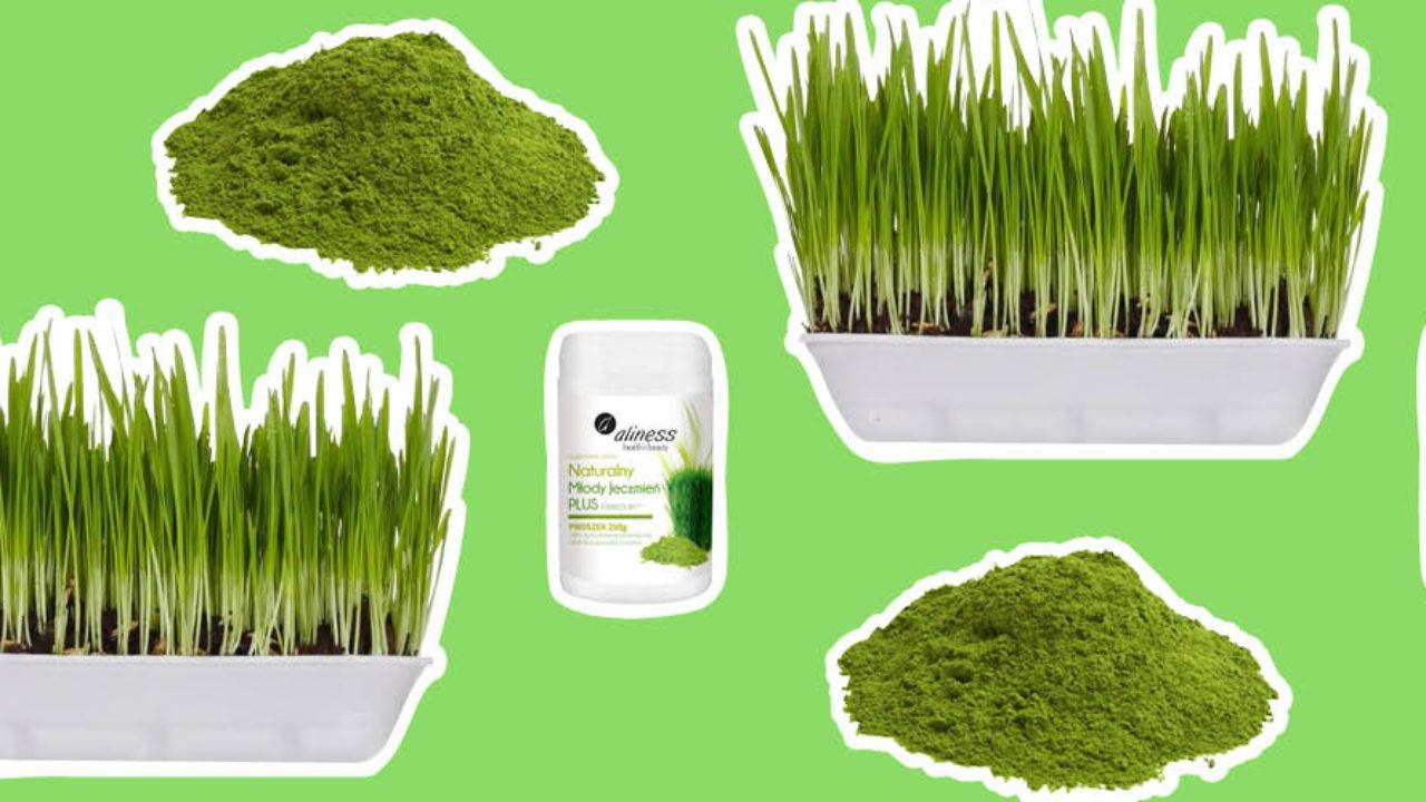 herbata młody zielony jęczmień